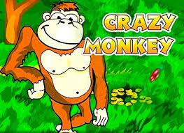 Crazy Monkey igraj s udovolstviem.